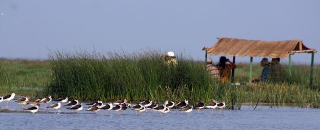 Bord watching - Chilka Lake Odisha - Backpackers group
