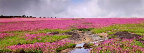 kaas plateau - The backpackers group - Heritage Site In India