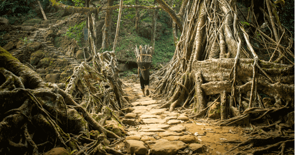 living-roots-bridge-meghalaya-the-backpackers-group