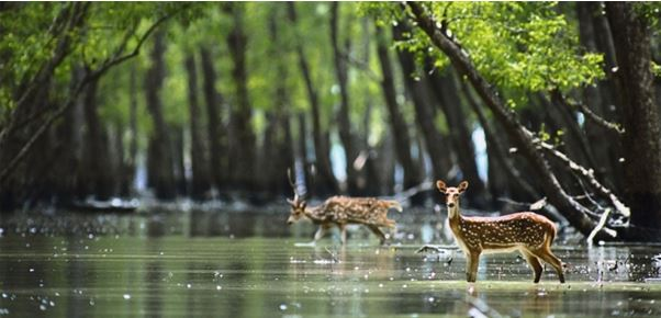 sunderban national park - The backpackers-group - Heritage Site In India