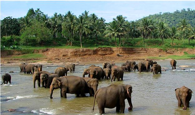 Wildlife Santuary in Odisha - Backpackers Group