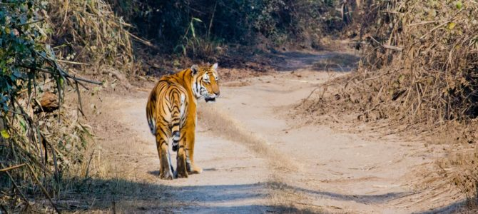 Wildlife Trip To Jim Corbett Tiger Reserve.