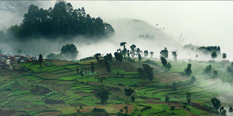 Kodaikanal - Most searched travel destination - The backpackers group