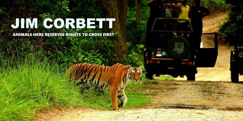 india-travel-calander-jim-corbett-the-backpackers-group-1