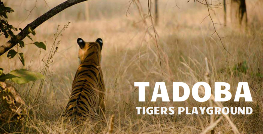 india-travel-calander-tadoba-the-backpackers-group
