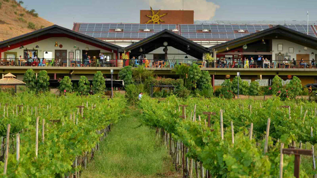 Sula Vineyards - New Weekend Gateway - The Backpackers Group - Vineyards are now new weekend gateways in India