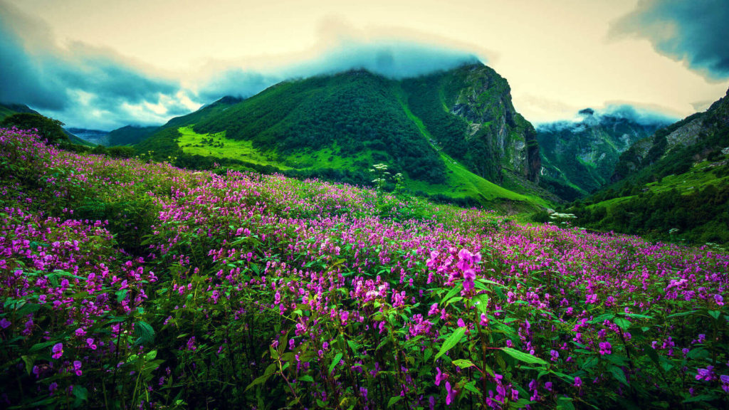 Cover - Valley of Flowers – Story Beyond Mountain and Mist - Uttarakhand - The Backpackers Group