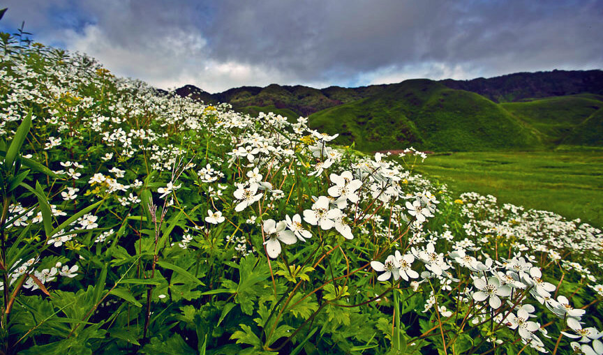 Dzukou Valley - Valley of Flowers – Story Beyond Mountain and Mist - The Backpackers Group