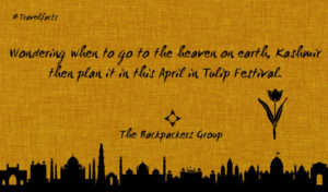 Tulip Festival - Kashmir - India Travel Facts - The Backpackers Group