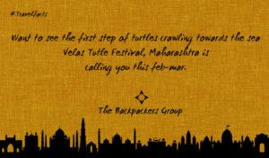 Turtle Festival - Velas Beach Festival - Maharashtra - India Travel Facts - The Backpackers Group