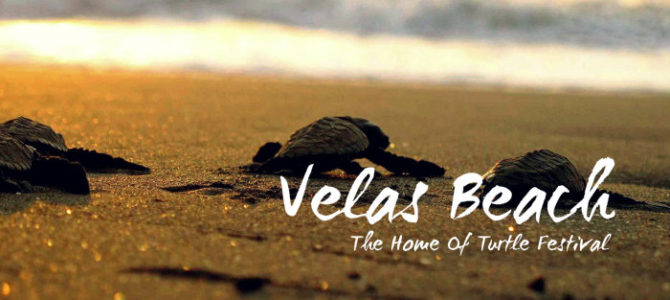 Velas Beach – Home of Turtle Festival