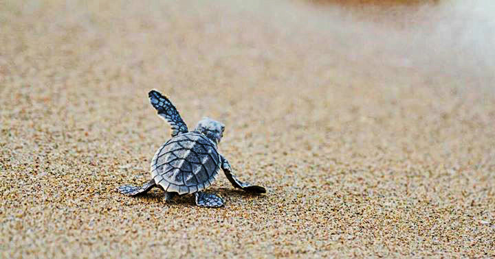 Velas Beach - Turtle Festival - Maharashtra - The Backpackers Group