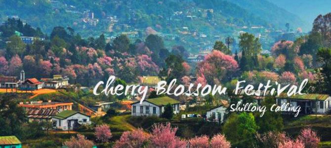 Cherry Blossom Festival- Shillong Calling