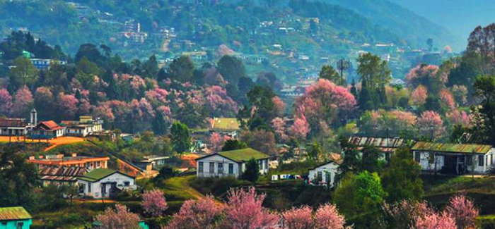 Cherry Blossom Festival - Shillong Calling - Meghalaya - The Backpackers Group
