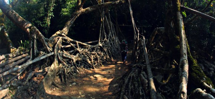 Kongthong - The Whistling Village of India - Living Root Bridge - Meghalaya - North East  India Travel - The Backpackers Group
